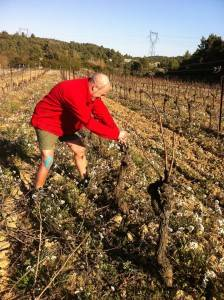 Barrie ties in Syrah canes
