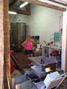 Crushing grapes pre fermentation