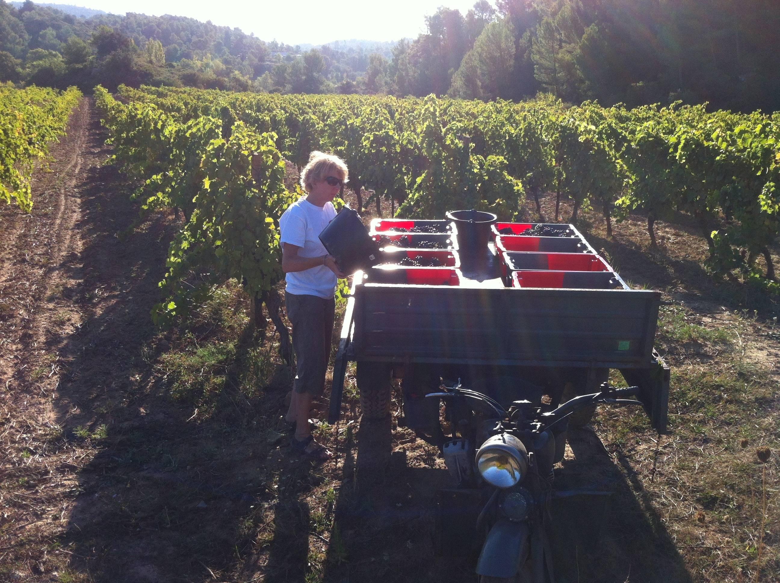 Juliet Bruce Jones MW in Syrah vineyard