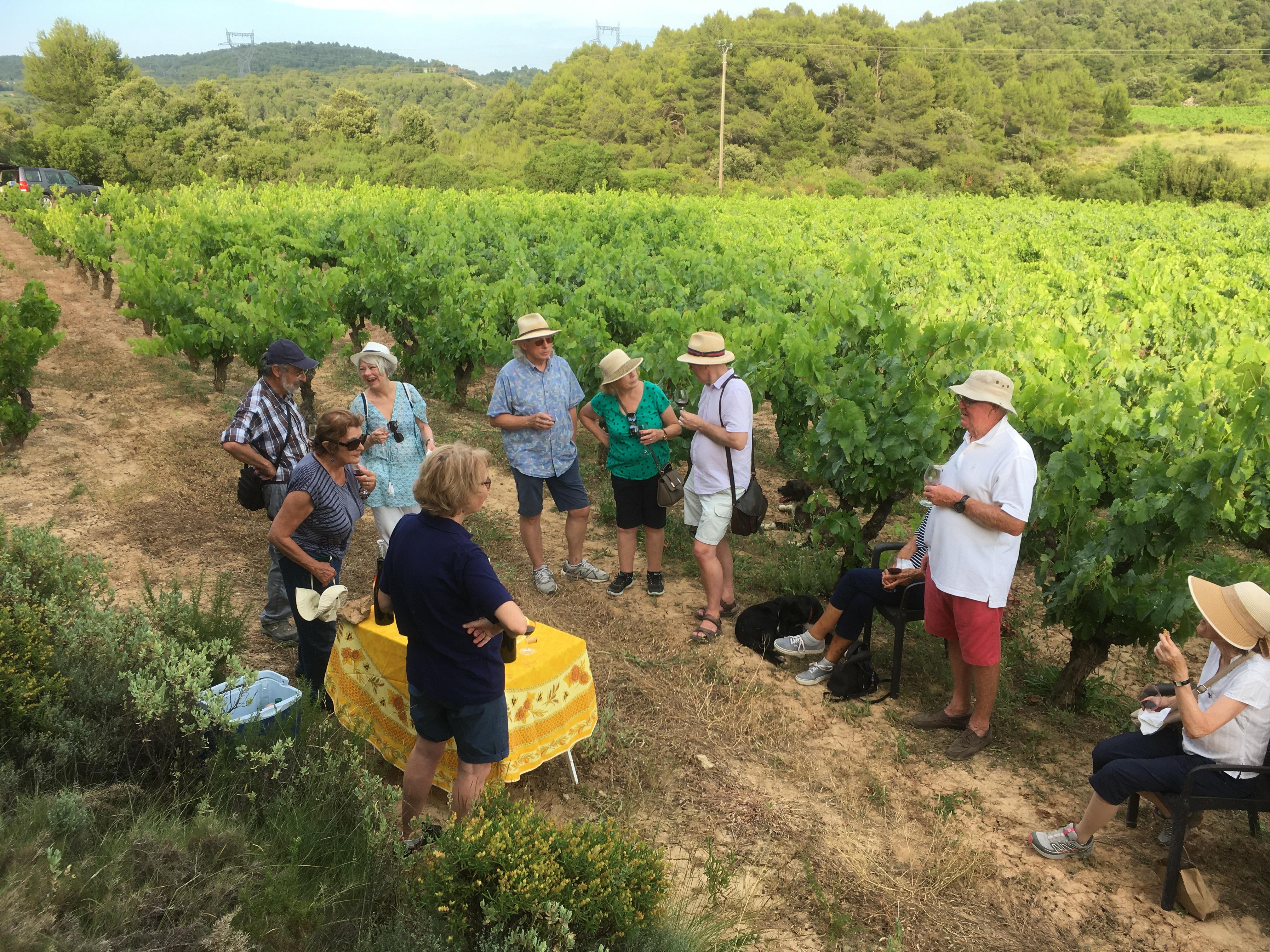 vineyard tour and wine tasting in Carignan vineyard