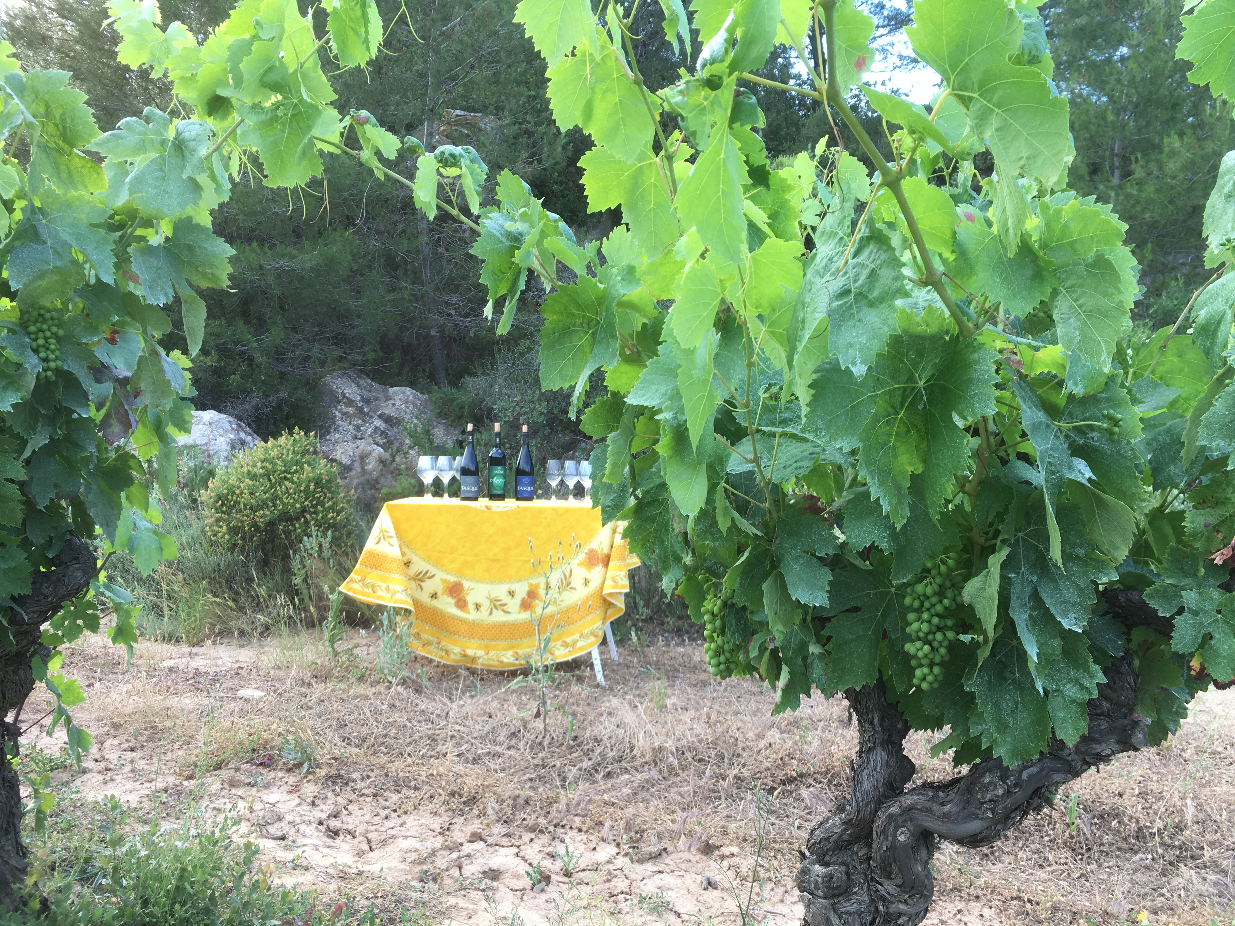 tasting vineyard